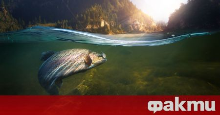Shocking: Fish steamed alive in sun-heated river (video) - F Fakti.bg - Curiosity