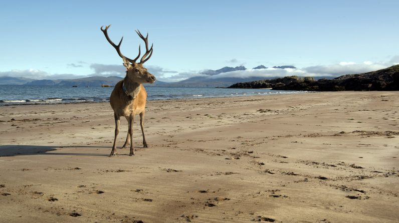 Two nudists have been fined for attacking a deer in Australia