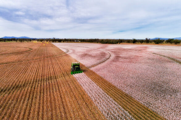 Australia: Farmers affected by catastrophic rats