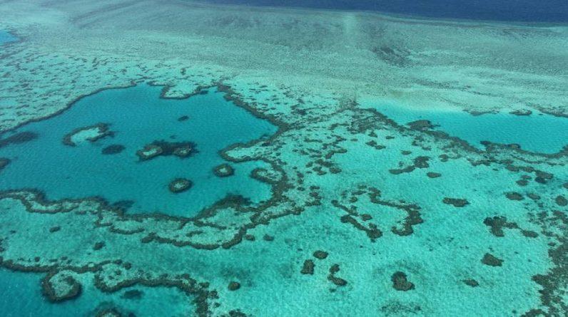 News |  Great Barrier Reef: Australia omits list of endangered species