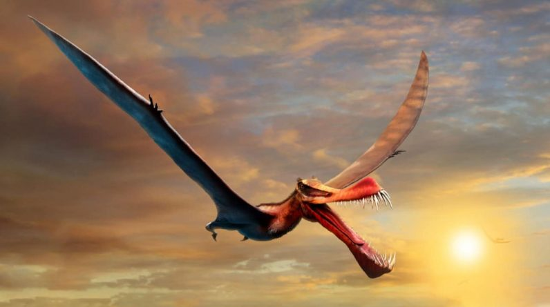 """They describe the flying dinosaur as a """"scary dragon"""" in Australia"""