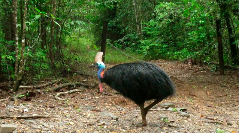 Australia's Tintree rainforest handed over to owners