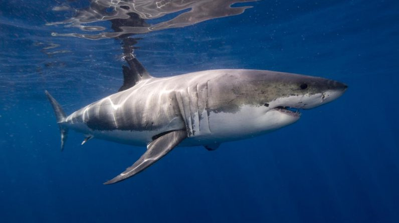 Man killed by shark in Australia, second worst attack in the country