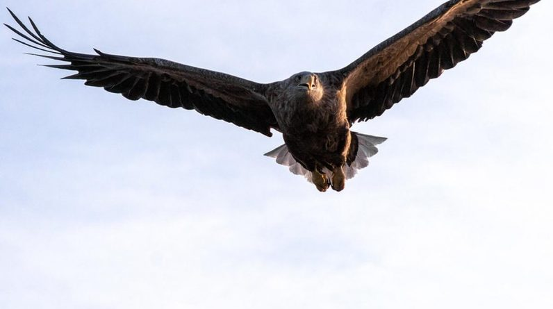 Researchers have found a scary eagle in Australia and a giant penguin in New Zealand