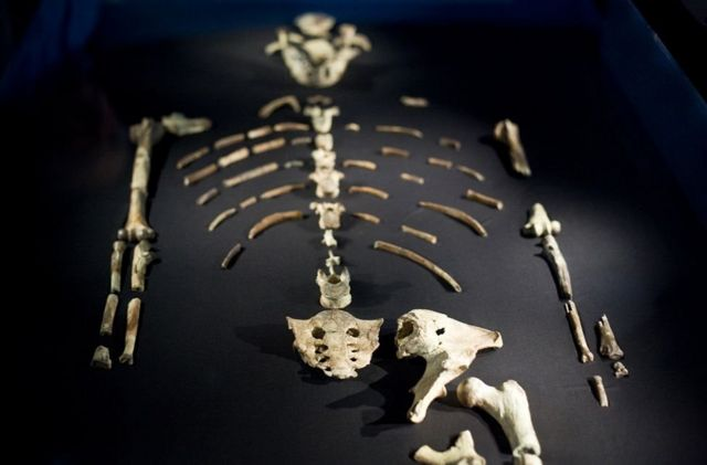 Lucy is a human fossil in Africa