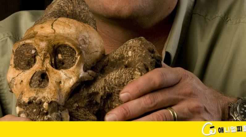 인류, 3천년 전부터 '정보의 외장화'로 뇌 용량 줄였다