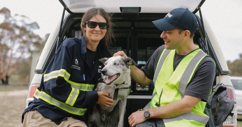 Hero dog awarded for saving hundreds of colas in Australian fire - Hero