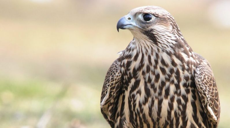 In Europe, one of the five bird species is endangered - the community