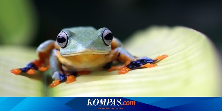 What is the difference between frogs and toads?